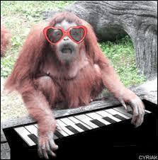 Je te jure ! Ce singe jouait d'un instrument, c'est...