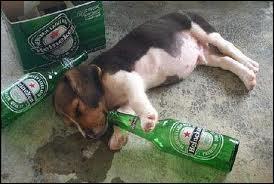 Qu'a bu ce chien ?