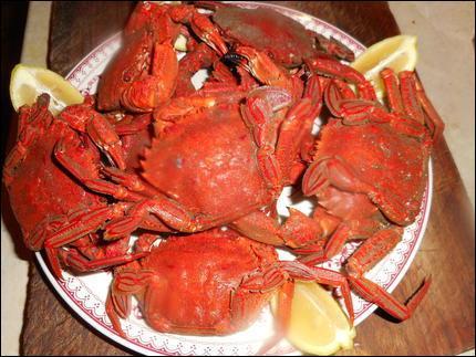 Donnez-moi le nom de ces crustacés avant que je vous passe la pince :