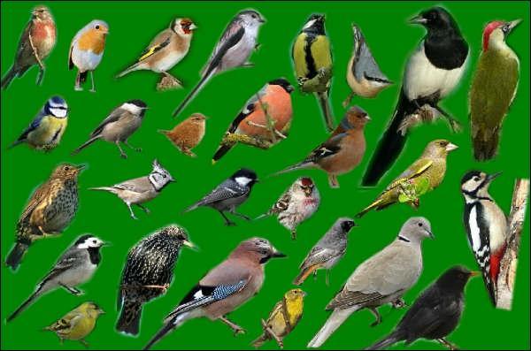 Quel oiseau zinzinule ?