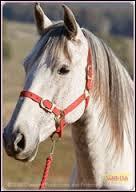 Caramelle est le deuxième cheval de.....
