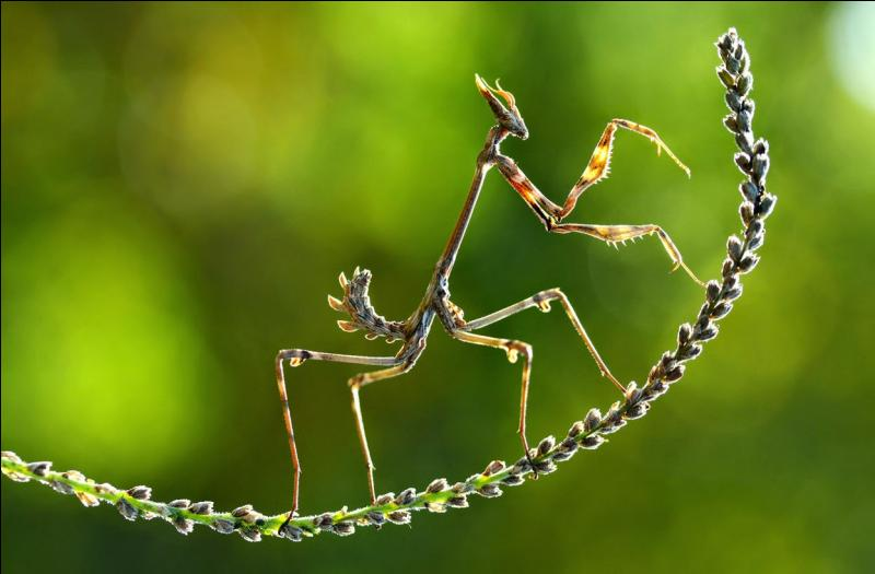 Et cet insecte un peu bizarre, avez-vous une idée de son identité ?