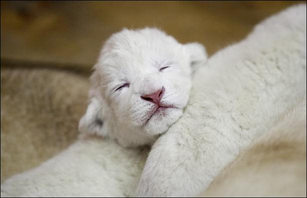 Identifiez cet endormi !