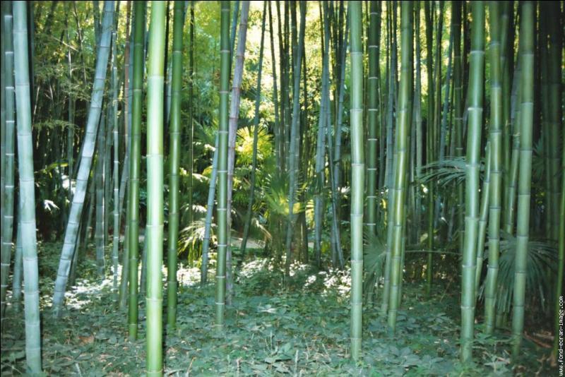 Dans quel département français pouvez-vous visiter la bambouseraie d'Anduze ?