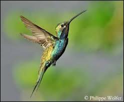 Quelle est la bonne orthographe de cet oiseau ?