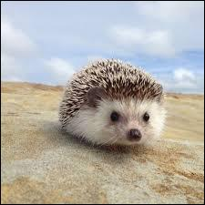 Comment se nomme cet animal piquant fortement ?