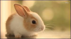 Que mangent le plus souvent les lapins ?