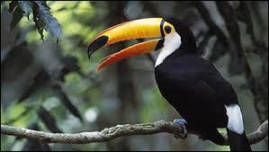 Quel est le nom entier de cet oiseau : le toucan...