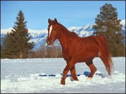 Comment s'appelle le lieu où dort le cheval ?