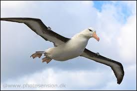 Comment s'appelle cet oiseau magnifique ?