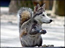 Quel cet animal ?