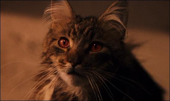 A qui appartient cette chatte ?