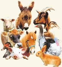 Les animaux de la ferme (1)