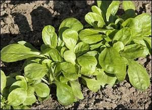 À quelle forme verbale conjuguée correspond le nom de cette salade ?