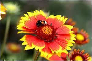 À quelle ville associez-vous cette fleur ?