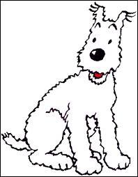 Milou, le chien de Tintin, est de quelle race ?