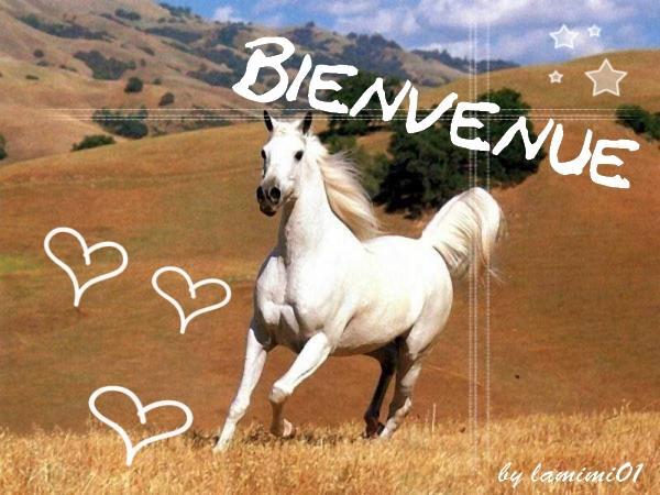 Les races des chevaux