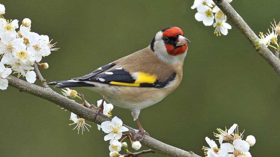 Quizz oiseaux des jardins quiz oiseaux for Oiseaux des jardins