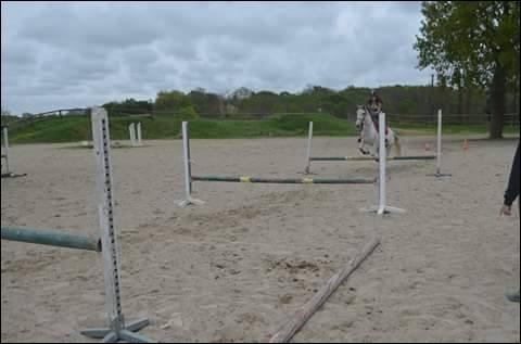 Les genres d'obstacles.Comment se nomme un obstacle fait d'une haie surmontée d'une ou de plusieurs barres montées les unes au-dessus des autres ?