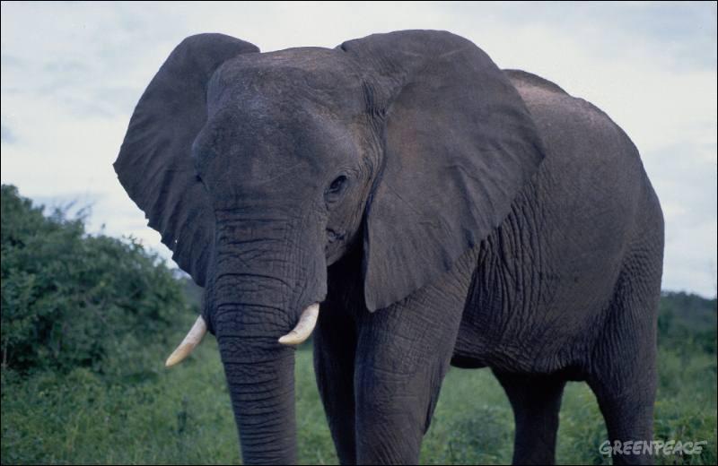 Vous avez trouvé la réponse précédente, bravo, alors trouvez le nom de cet éléphant !