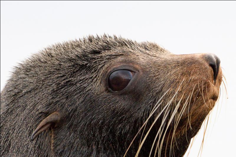 Voici le dernier animal de ce quiz, si vous avez trouvé le précédent, la réponse est évidente !