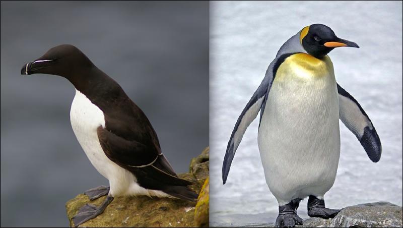 On va bien voir si c'est rentré dans votre tête, quel est le nom de l'oiseau de gauche ?