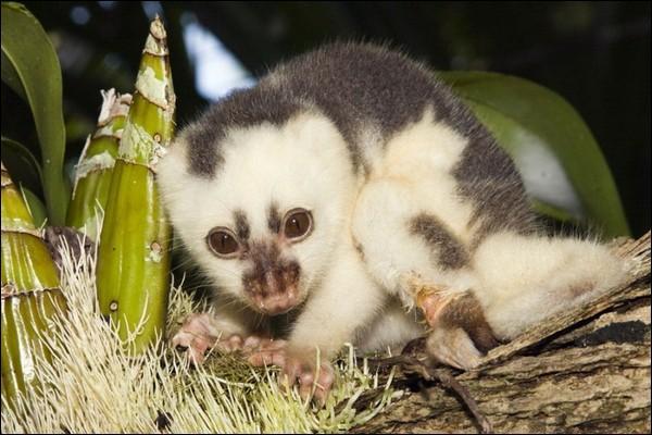 Le couscouse est un animal de l'ordre des marsupials. Celui ci est tâcheté.Combien y a-t-il de fautes ?