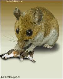 """""""La souris se fait manger par le chat"""" cette phrase est à la voix active."""