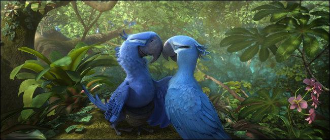 Blu a un léger problème, il est le dernier mâle de son espèce et il ne sait pas voler, alors évidemment ça lui complique la vie, mais tout ça va changer car il part pour ...