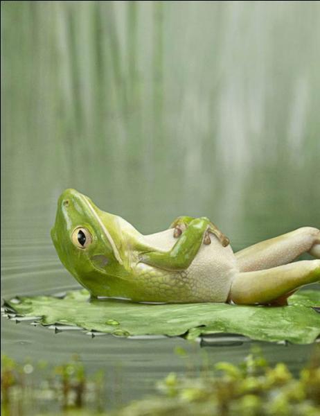 Quel est le 'cri' de la grenouille ?