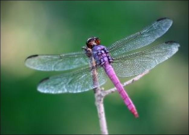 Regardez bien la photo, est-ce une libellule ou une demoiselle ? (Si vous jouez les quizz de Moquette, cette question sera une simple formalité) ;-)