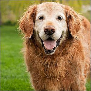 Combien d'années vit un chien ?