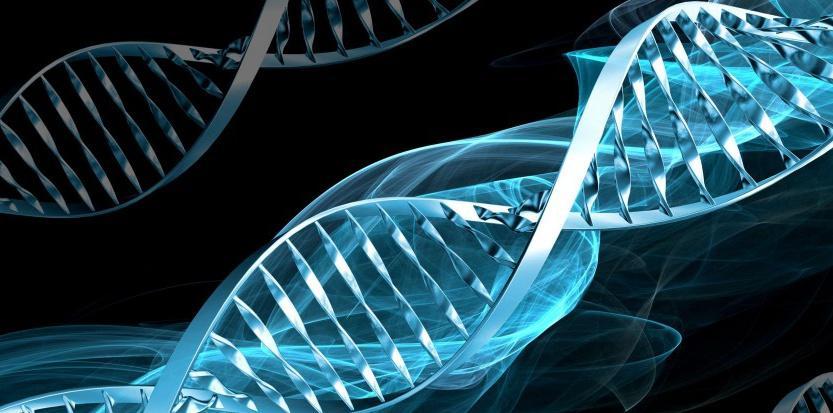 De l'ADN à la protéine