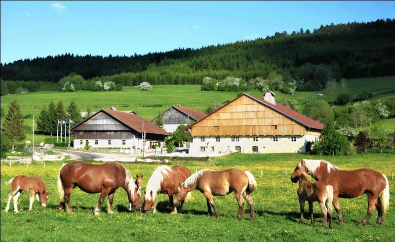 Dans une ferme, un fermier possède 5 vaches, 6 chats, 3 chevaux, 15 poules, 1 taureau et 5 chiens. Quel âge a le fermier ?