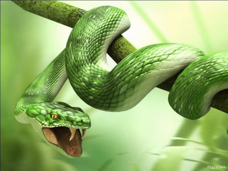 Un serpent est tombé dans un ravin de 20 mètres de profondeur, et compte remonter à la surface. Chaque jour, le serpent monte de 3 mètres, mais à minuit, épuisé par son parcours, il dégringole de 2 mètres. En combien de jours le serpent parviendra-t-il à la surface ?