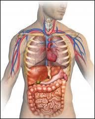 Le corps humain est plein de canaux et de tuyaux. Où se trouve le canal épendymaire ?