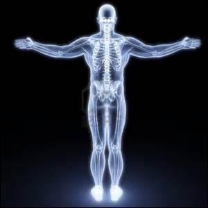 Comment se nomment les os surnuméraires généralement présents au niveau du cerveau et de la main ?