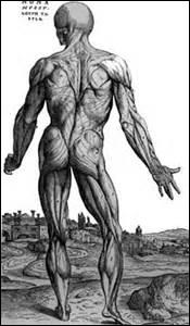 Dans quelle partie du corps peut-on trouver des glandes de Moebius ?