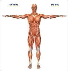 Quel organe contient des anses de Henlé ?