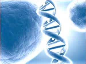 Quelle enzyme permet de dupliquer l'ADN lors de la duplication cellulaire ?
