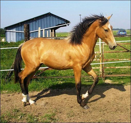 Joli prénom ou robe de cheval ! C'est la couleur...