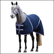 Quels chevaux faut-il protéger avec une couverture ?