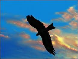 """Qui interprète """"L'Aigle noir"""" dans les années 70 ?"""