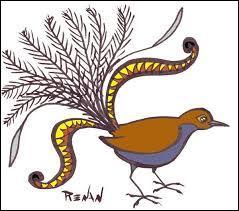 Quelle est la particularité de l'oiseau-lyre ?
