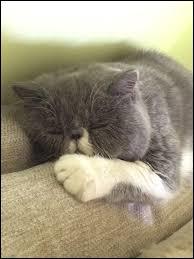 Qui a un chat qui se nomme Jumbo ?