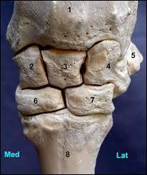 Comment s'appelle cet os ?