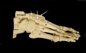 Où se situe cet os ?
