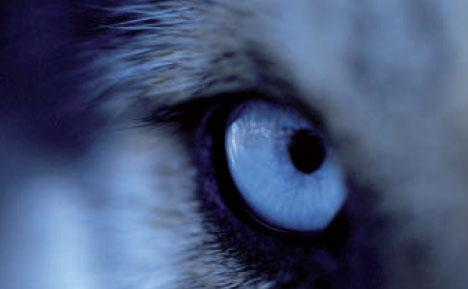 Expresssions sur les chats, chiens et loups