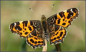 Trouvez le nom de ce joli papillon !