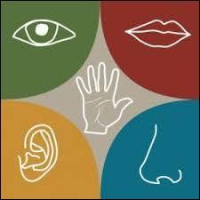 Nous sommes doués de 5 sens. Lequel exactement nous permet d'entendre ?